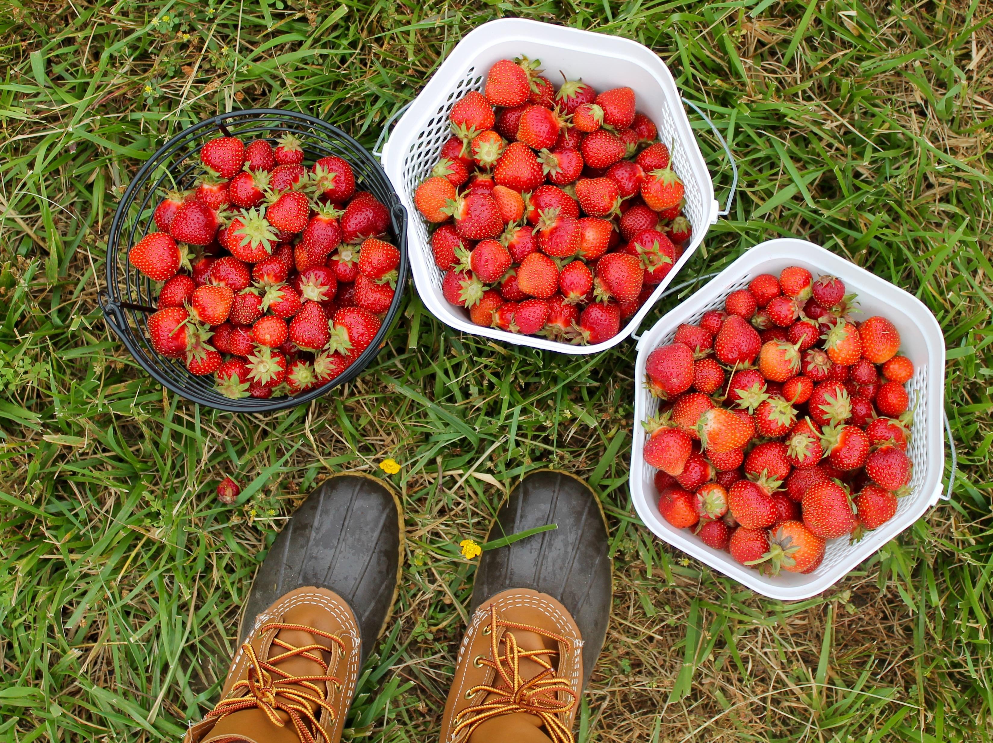 cayla baskets of berries (photo by Cayla Rodney)